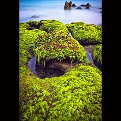Moss covered rocks in Co Thach Beach (-clicking-) Tags: longexposure sea seascape green beach water landscape moss rocks onthebeach waves vietnam seaward cổthạch vietnameselandscape blinkagain bestofblinkwinners blinksuperstars bestofsuperstars blink4gallery