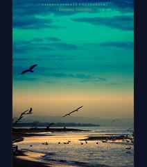 - evening poetries - (swaily  Claudio Parente) Tags: poetry mare poesia tramonti gabbiani sera claudioparente swaily bestcapturesaoi mygearandme mygearandmepremium mygearandmebronze mygearandmesilver mygearandmegold mygearandmeplatinum mygearandmediamond galleryoffantasticshots besteverdigitalphotography