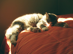 sleeping beauty (anilina roja ) Tags: sleeping beauty animal cat lazy gato gata gatita sueo reino lazycat durmiendo flojera soando