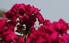 Flowers 84