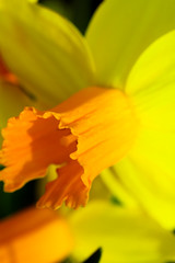 Spring 2 (jfl1066) Tags: flowers newjersey spring nj flowersplants middlesexcounty rutgersgardens