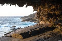 Australie - Kangaroo Island - Admiral's Arch (jf garbez) Tags: ocean voyage travel sea cliff mer landscape nikon australia nikkor paysage southaustralia falaise kangarooisland nationalgeographic australie oceania ocan d600 2485mm ocanie nikond600 australiemridionale nikonpassion nikonflickraward mygearandme mygearandmepremium capducouedic nikkor240850mmf3545 lekangourou