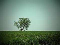 Buena cosecha (camarasa62) Tags: verde primavera arbol olympus solo campo arbre solitario verd tranquilidad photomix ordi cebada mygearandme mygearandmepremium photographyforrecreation rememberthatmomentlevel1 vigilantphotographersunite