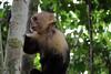costarica2013_monkey01
