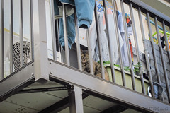 Today's Cat@2013-04-27 (masatsu) Tags: cat canon catspotting thebiggestgroupwithonlycats powershots95