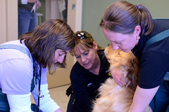 DSC_0846a (Ali Crehan) Tags: dog cat ma event april shelter clinic rabies scituate 2013 042713