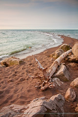 Point Pelee (Miles Away Photography - Mandi Miles) Tags: park trees bird history nature beautiful birds forest point fly spring branch birding wing feather national pelee migration pointpelee naturalist mandimiles milesawayphotography