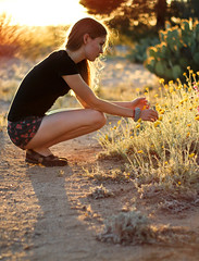 Sunset (Aimee-A) Tags: arizona cactus flower outdoors desert az dirt