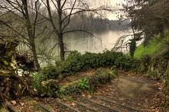Scala (gviarizzo) Tags: tree alberi river torino stair po scala turin hdr fkiumepo