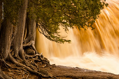 Rooted In Spring (Boreal Bird) Tags: water power gooseberryfalls springmelt