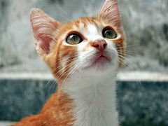 (A. Carolina Andrade) Tags: baby cute love cat oliver lindo gato fofo