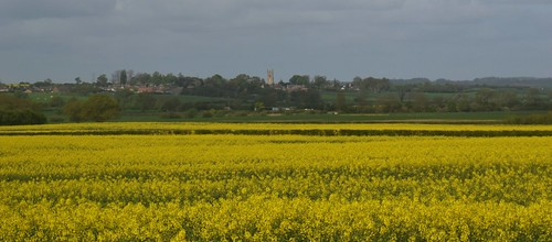 Clopton, Golden Fields.