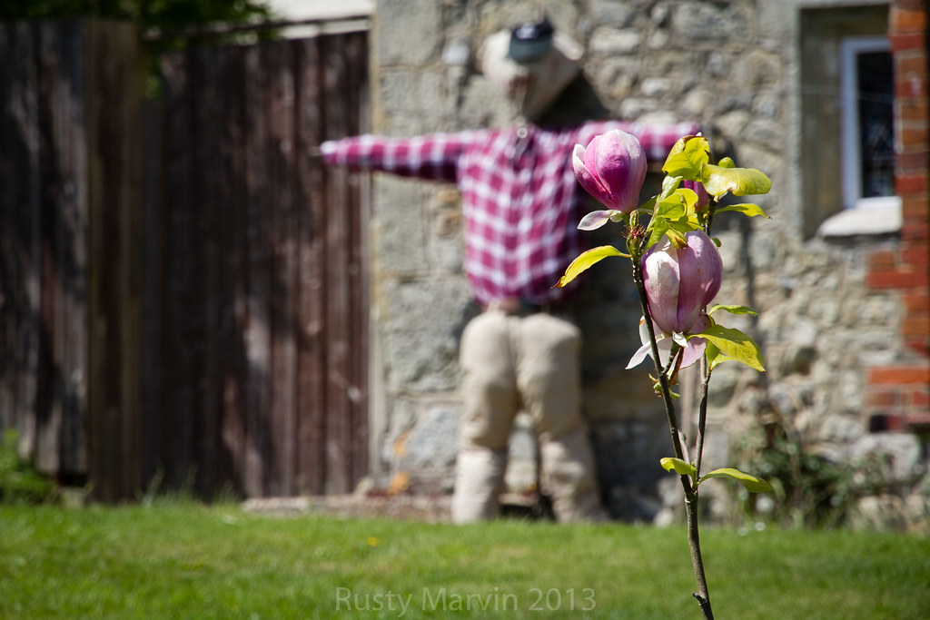 2e490793beeb Scarecrow Candid - Against the wall (Rusty Marvin - JohnWoracker.com) Tags