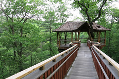 Tree House 2 (yuan2003) Tags: park pennsylvania scranton aug nay