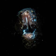 Out of the dark... #PADI #scuba #diving #sport #active #awesome #underwater #LSD #SimplyBeautiful #DiveSaintLucia #moray #ray #eel #turtle #lionfish #StLucia #London #LSDscuba #cool #ocean #boat #underwater #pufferfish #octopus #seahorse #jawfish #wreck # (lsdscuba) Tags: ifttt instagram scuba lsd