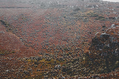 Pramo Color (Julin Rodrguez) Tags: aprobado julianrodriguezph paramo naranja frailejon frailejones landscape arte colombia colombiano bogota bogotano