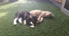 Lazy day at the cat cafe via http://ift.tt/29KELz0 (dozhub) Tags: cat kitty kitten cute funny aww adorable cats