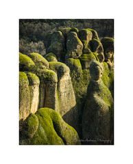 Meteora landscape VII (Christos Andronis) Tags: beautyinnature brown scenic tranquility woodlandstrees yellow
