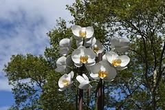 Treetop Phalaenopsis (Eddie C3) Tags: newyorkcity nycparks publicart publicspaces centralpark phalaenopsis isagenzken twoorchids doriscfreedmanplaza