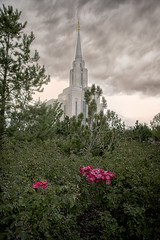 Oquirrh Mountain Temple-Sunset Sept 4, 2016 (sumoetx) Tags: oquirrhmountaintemplesunsetsept4 2016 lds mormon mormontemple ldstemple oquirrhmountaintemple oquirrh daybreak south jordan religious religion sacred structure edifice building temple church sunday sunset sunsethdr nikon d750 hdr sumoetx howardjackman utah utahphotographer utahhdr utahresident photowalk angels moroni angel angle blossom trees landscaping sunflower colors colorful clouds wind summer storm stormy thechurchofjesuschristoflatterdaysaints