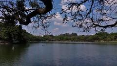 (Renan Godinho) Tags: ibirapuera park parque nature natureza beautiful greenlife paisagem landscape