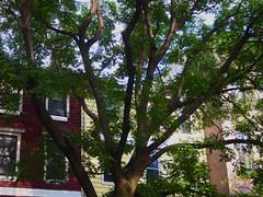 Brooklyn, NY (cisc1970) Tags: brooklyn canon canonpowershots100 nyc