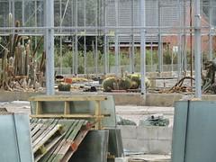 Those few cacti are still there (Echinocactus) (wallygrom) Tags: england westsussex angmering cowlane manornursery manornurseries buildingsite demolition derelict housingestate gardencentre theycallitprogress swanbournepark