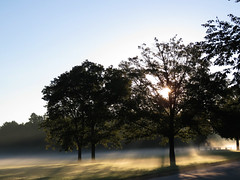 Even through the fog, your dreams can shine through (Laura Rowan) Tags: fog mist sun rays morning beautiful sunshine foggy bussewoods schaumburg summer cool