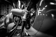 Grumman Bearcat and Wildcat. (aquanout) Tags: blackandwhite monochrome plane aerolplane aircraft airplane aviation