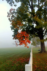 Morning on the Green (stevel2112@rocketmail.com) Tags: vernont fall autumn mapletree coloredleaves fog whitefence