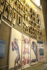 Reptile display (Tony Shertila) Tags: 20160811151056 barriosalamanca esp geo:lat=4044060685 geo:lon=368980229 geotagged madrid spain europe outdoor weather day clear sky indoor museum museonacionaldecienciasnaturales