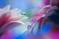 Pastel (Marilena Fattore) Tags: pastels macro artistic canon tamron colors water waterdrops fantasy nature closeup petals reflection light blue lightblue pink purple delicate softness flowers garden details