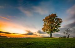 Autumn Tree (vsivtsev.juri) Tags: tokina 116 tokina116 nikon d5300 estonia eesti vaivara narva idavirumaa virumaa