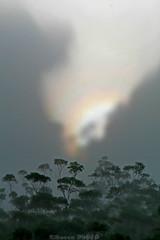 Mist and sunlight (boze610 [ free tibet ] [in giro per il mondo]) Tags: mist nebbia sunlight sole nature naturalmente natura naturallight tree trees greatphotographers groccaphoto katoomba bluemountains