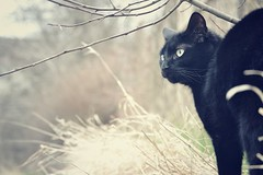 Meg {Explore} (Electra_star) Tags: black cat branches