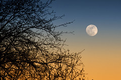 Midwest Moonlight (dbushue) Tags: sky moon tree nature silhouette landscape evening illinois nikon midwest gradient 2011 coth supershot absolutelystunningscapes damniwishidtakenthat coth5 dailynaturetnc13