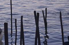 Grafismo marinho (Mrcia Valle) Tags: sea brazil water gua brasil reflections contraluz pier mar nikon eau silhouete bahia contraste reflexos brasile brsil portoseguro silhueta caravelas ancoradouro nikkor70300mm d5100 mrciavalle
