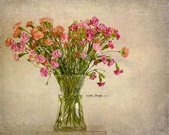 Bunch of Blooms (dog ma) Tags: flowers stilllife dogma carnations susangary shanarae