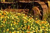 Wildflowers & Rust (luckyme88) Tags: california flower wildflowers floralappreciation 18200mmf3556gvrii