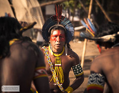 Indio Kayapó (Isabela Nicoletti) Tags: brazil brasil amazon indian xingu indios cultura indio indigenous amazonia travelphotography etnia kaiapo kayapo caiapo encontrodecultura aldeiamultietnica