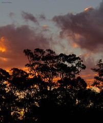 burnt orange (loobyloo55) Tags: trees sunset sky orange clouds australia newsouthwales