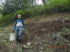 Knotweed Hill (Holy Outlaw) Tags: restoration urbanforest workparties northbeachpark urbanrestoration knotweedhill