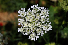 Flower Flake
