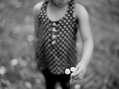 (DowntownRickyBrown) Tags: flower bokeh daisy contax645 fujineopanacros carlzeissplanar80mmf2