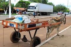 O carroceiro com sua carroça (vandevoern) Tags: brasil burro carro jumento cavalo trabalho maranhão transporte bico carga bacabal vandevoern