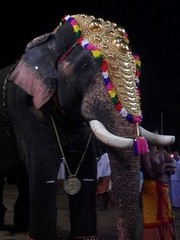 koodalmanikyam utsavam 2013 shiveli2 (koodalmanikyam-utsavam) Tags: elephant utsavam irinjalakuda koodalmanikyam irinjalakudautsavam shiveli koodalmanikyamtemple koodalmanikyamutsavam2013 koodalmanikyamutsavamphotos