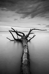 The Fallen (Muhammad Hafiz Muhamad) Tags: sunset blackandwhite bw beach monochrome landscapes nikon seascapes sigma malaysia bnw pantai selangor hafiz waterscapes banting leefilter landscapesnature pantaikelanang d7000 sigma1750mmf28exdcoshsm 06hgnd 09hgnd mhafiz87 muhammadhafizbinmuhamad