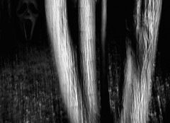 . . . the dark woods(with presence) (orangecapri) Tags: trees blackandwhite blur monochrome face night canon dark mono ghost blurred scream presence spectre icm ghoul darkart ef1740f4l hss darkwoods intentionalcameramovement canon1d3 blinkagain sliderssunday orangecapri