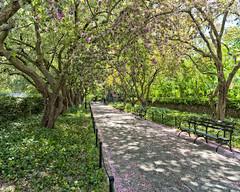 b-CP-Blume-D800_050413_0260 (JB Artful Photo) Tags: park city urban newyork landscape centralpark manhattan nikond800 nikon2470f28