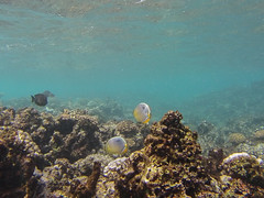 Around Coco & Flicit islands (dataichi) Tags: ocean travel fish tourism island underwater indian diving snorkling destination seychelles fishes indien gopro sechelles